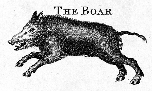 The Boar or pig, A New Complete, and Universal Body, or system of Natural History, 1785, From The Library at The Mariners' Museum. - NOAA